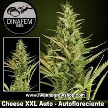 Cheese XXL Auto - Dinafem - Autofloreciente