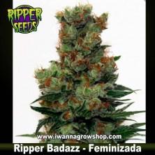 Ripper Badazz – Feminizada – Ripper Seeds