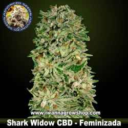 Shark Widow CBD – Feminizada – Advanced Seeds