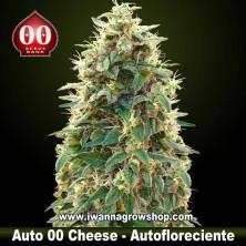 Auto 00 Cheese – Autofloreciente – 00 Seeds