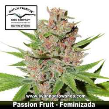 Passion Fruit – Feminizada – Dutch Passion