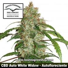 CBD Auto White Widow – Autofloreciente – Dutch Passion
