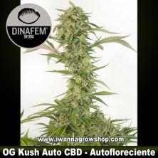 OG Kush Auto CBD – Autofloreciente – Dinafem Seeds