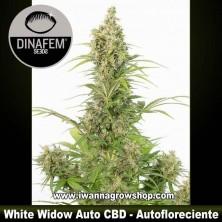 White Widow Auto CBD – Autofloreciente – Dinafem Seeds