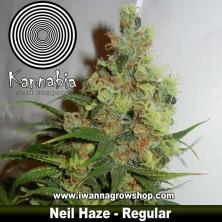 Neil Haze – Regular – Kannabia Seeds