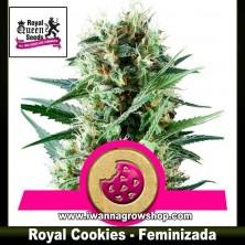Royal Cookies – Feminizada – Royal Queen