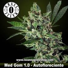 Med Gom 1.0 – Autofloreciente – Grass O Matic