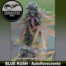 Blue Kush Auto – Autofloreciente – Dinafem Seeds