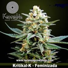 Kritikal-K– Feminizada