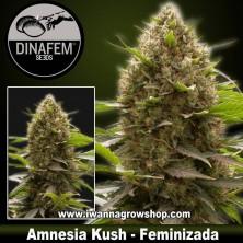 Amnesia Kush – Feminizada – Dinafem Seeds