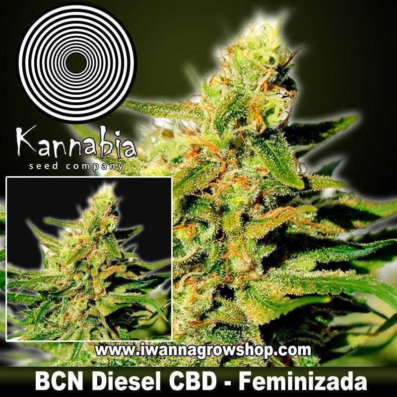 BCN Diesel CBD