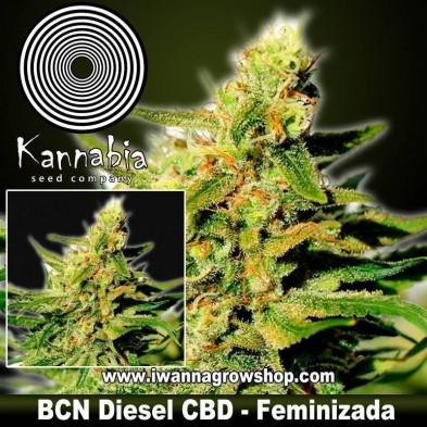 BCN Diesel CBD – Feminizada