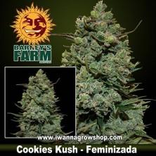 Cookies Kush – Feminizada – Barney´s Farm