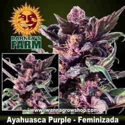 Ayahuasca Purple