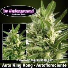Auto King Kong – Autofloreciente – DR Underground