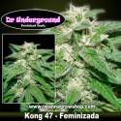 Kong 47 – Feminizada – DR Underground