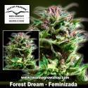 Forest Dream – Feminizada – Dutch Passion