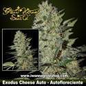 Exodus Cheese Auto – Autofloreciente – Green House