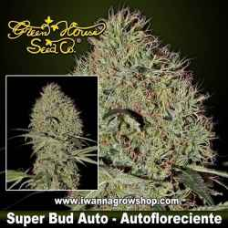 Super Bud Auto – Autofloreciente – Green House
