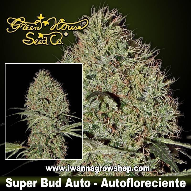 Super Bud Auto