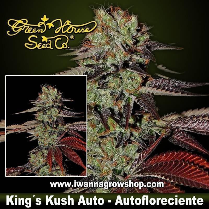 King's Kush Auto