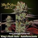 King's Kush Auto – Autofloreciente – Green House