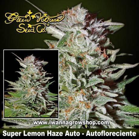Super Lemon Haze Auto
