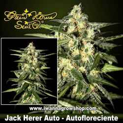 Jack Herer Auto – Autofloreciente – Green House