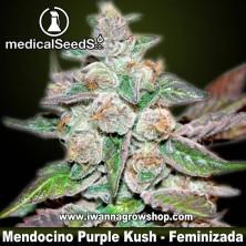 Mendocino Purple Kush – Feminizada