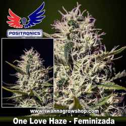 One Love Haze – Feminizada