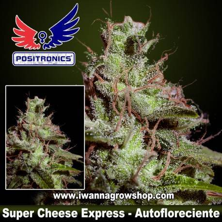 Super Cheese Express
