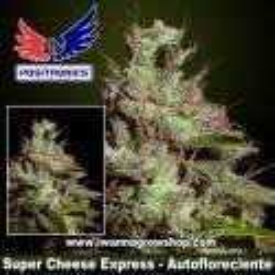 Super Cheese Express – Autofloreciente