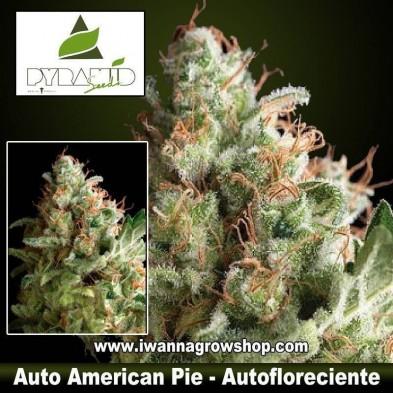Auto American Pie – Autofloreciente