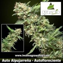 Auto Alpujarreña – Autofloreciente