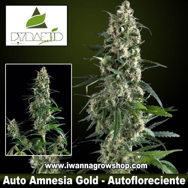 Auto Amnesia Gold