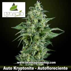 Auto Kryptonite – Autofloreciente