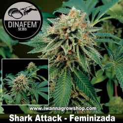 Shark Attack – Feminizada – Dinafem Seeds