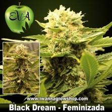 Black Dream – Feminizada – Eva Seeds