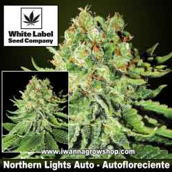 Northern Lights Auto – Autofloreciente