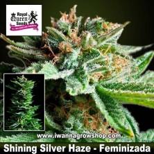 Shining Silver Haze