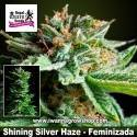 Shining Silver Haze – Feminizada – Royal Queen