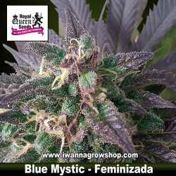 Blue Mystic – Feminizada – Royal Queen