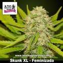 Skunk XL – Feminizada – Royal Queen