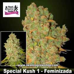Special Kush 1 – Feminizada – Royal Queen