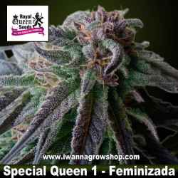 Special Queen 1– Feminizada – Royal Queen