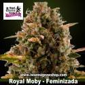 Royal Moby – Feminizada – Royal Queen