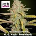 OG Kush – Feminizada – Royal Queen