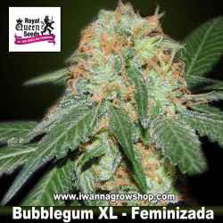 Bubblegum XL – Feminizada – Royal Queen