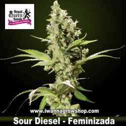 Sour Diesel – Feminizada – Royal Queen