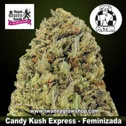 Candy Kush Express (Fast Version) – Feminizada – Royal Queen
